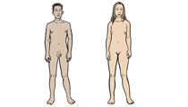 Naked male and female bodies (illustration)