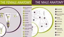 Male and female anatomy charts