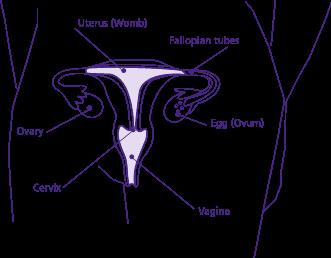 Drive birth sex control low pill